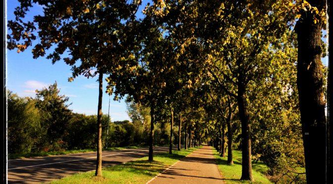 Pensieri di un pomeriggio d'autunno.